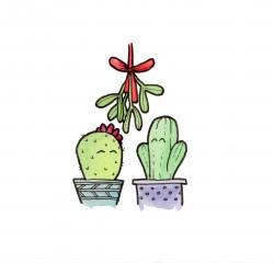 Tiny Cacti - Mistletoe
