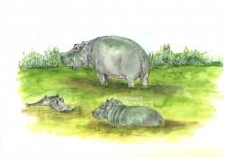 afrikaanse nijlpaarden