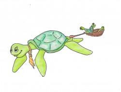 Vader Schildpad
