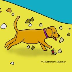 Hond op het strand