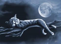 kat, maan, maanlicht